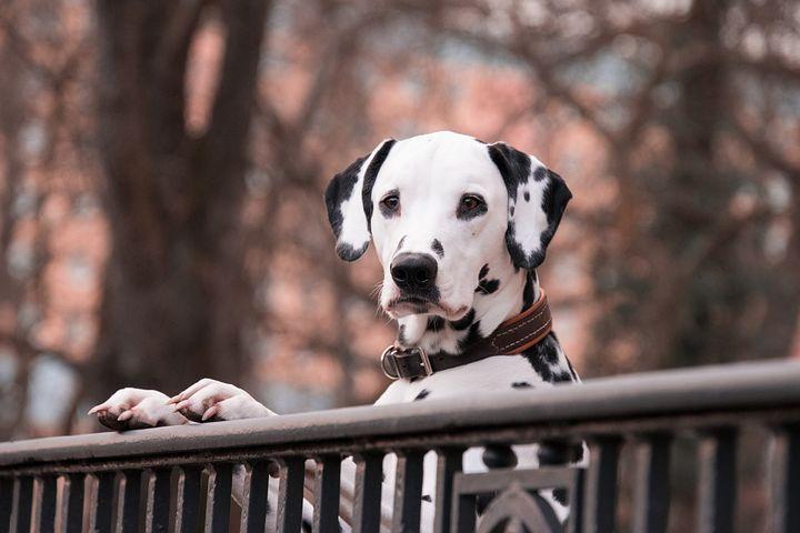 Des conseils pour apprendre la propreté à son chien